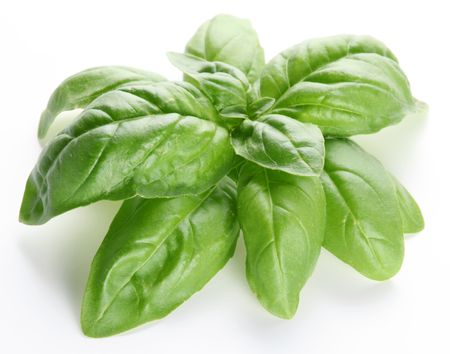 Leaves of basil on a white background photo