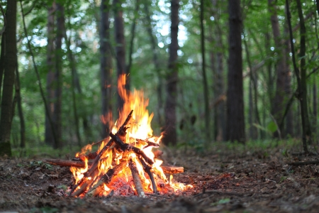 Bonfire in the forest. photo