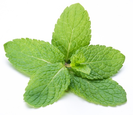 mint leaves: Mint leaves on a white background