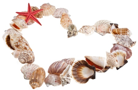 Shells in a shape of  valentines heart on a white photo