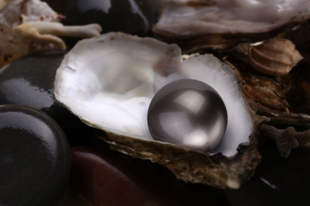 black pebbles: Image of a black pearl in a shell on a white background.