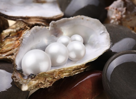 Image placer pearls in a shell on the wet pebbles. Stock Photo