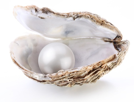 pearl: Image of a white pearl in a shell on a white background.
