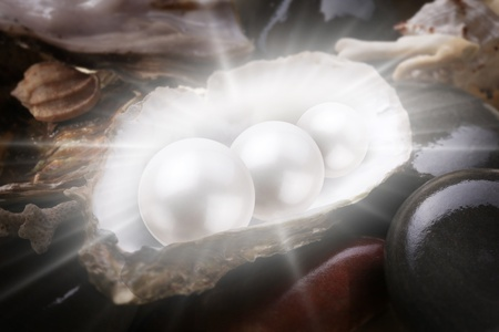 Image of three pearls in the shell on wet pebbles. photo