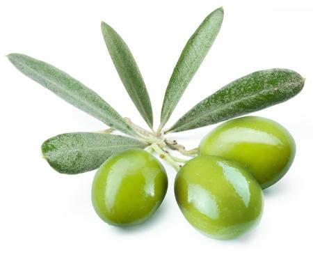 foglie ulivo: Tre olive verdi sul ramo. Oggetto su sfondo bianco