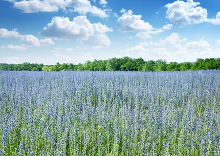 medow: Beautiful field of wild flowers and blue cloudly sky on the background. Stock Photo