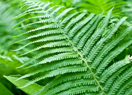 Fresh green fern leaf. Close-up shot.  photo