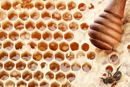 Honeycombs and wooden stick. Isolated on a white background. Stock Photo - 9976528