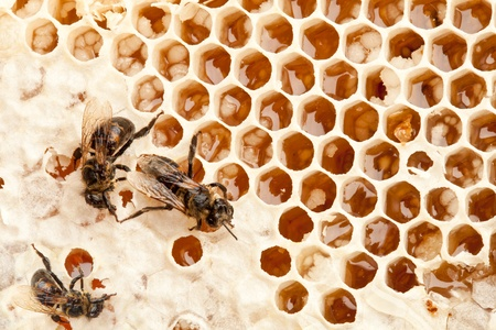 Close up view of honeycombs. Stock Photo - 9976525