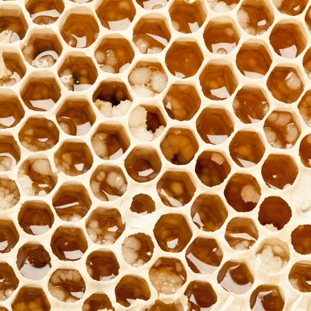 Close up view of honeycombs. Stock Photo - 9976393