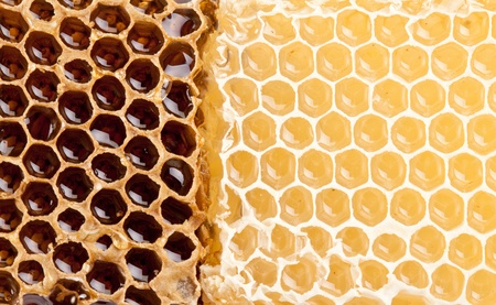 Close up view of honeycombs. Stock Photo - 9976527
