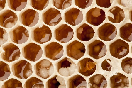 Close up view of honeycombs. Stock Photo - 10065945