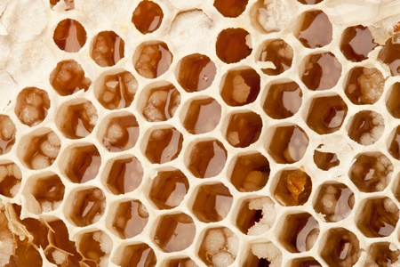 Close up view of honeycombs. Stock Photo - 10065947