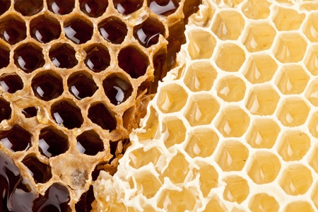 Close up view of honeycombs. Stock Photo - 10065952