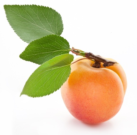 Apricot with leaf on a white background. photo