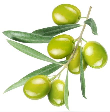 Oliven am Zweig mit Blättern isoliert auf weiß. Standard-Bild