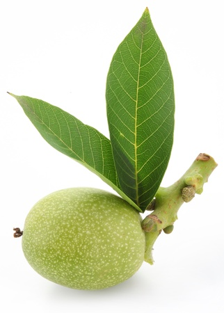 Green walnut with leaves. Isolated on a white background. Stockfoto