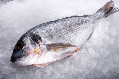 Raw fish dorado on the background of small ice photo
