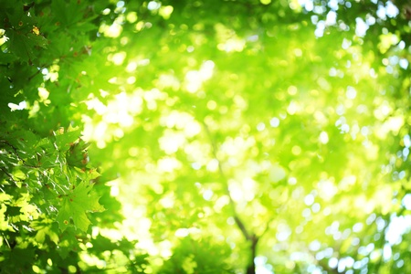 Abstract blurred background. Suns rays shining through the lush greens.