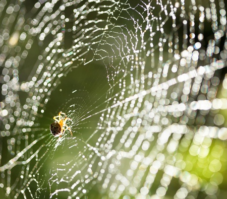 spider: Spider on the web.