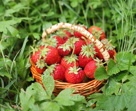 hamper: Wild strawberry in the basket on the grass. Stock Photo