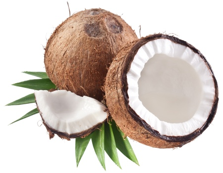 coco palm: High-quality photos of coconuts on a white background.