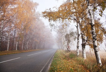 Forest road in a foggy autumn day. Stock Photo - 11373593