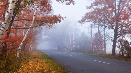 Forest road in a foggy autumn day. Stock Photo - 11373597