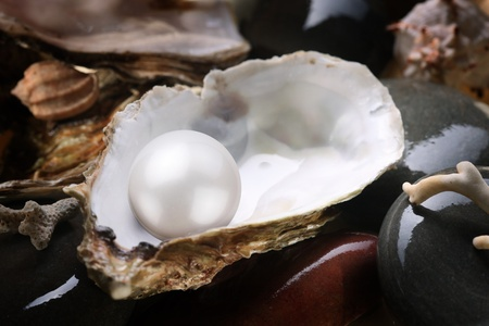 oyster shell: Image of a white pearl in the shell on wet pebbles.
