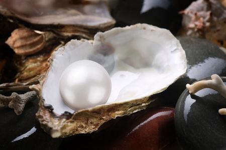 perlas: Imagen de un color blanco perla en la concha de guijarros mojados.