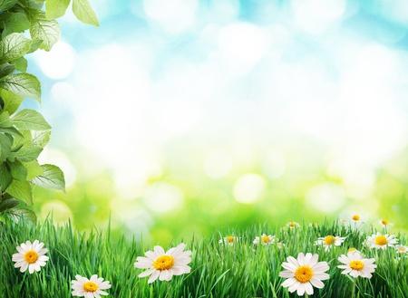 Daisy field in the sunny summer day. photo