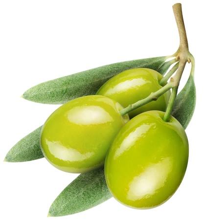 rama de olivo: Aceitunas con hojas sobre un fondo blanco. Foto de archivo