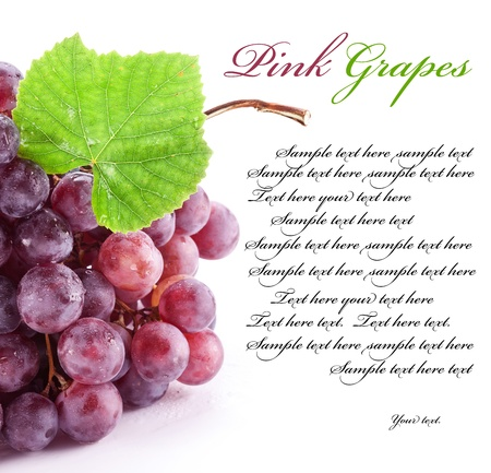 Red grape isolated on a white background. Space for text on the right. photo