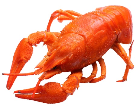 Boiled crawfish on a white background  photo