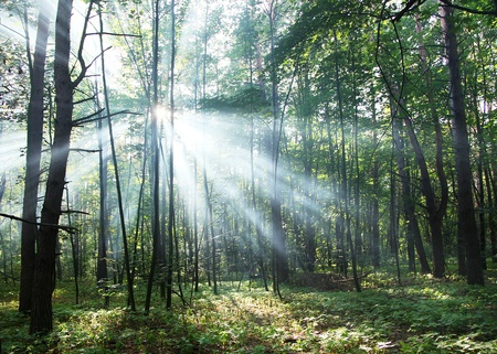 mystical forest: Sun Stock Photo