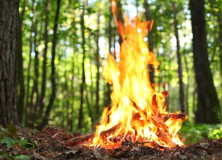 embers: Bonfire in the forest