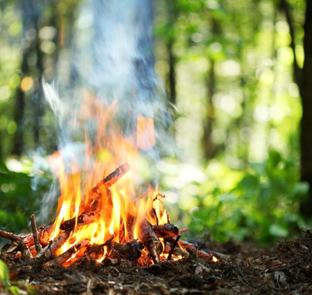 campfire: Bonfire in the forest