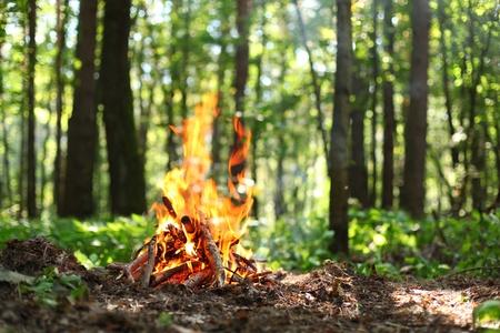 campamento: Hoguera en el bosque Foto de archivo