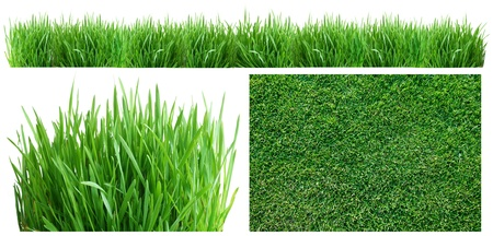 Spring green grass  Top view, side, and panoramic  On a white background  photo
