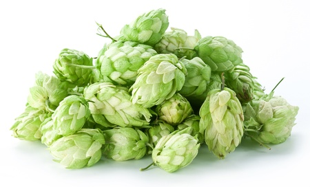 bitterness: branch of hops on a white background Stock Photo