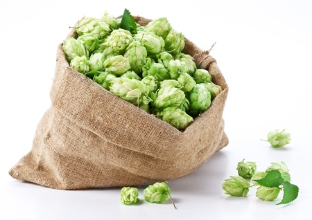 bitterness: Sack of hops on a white background  Stock Photo