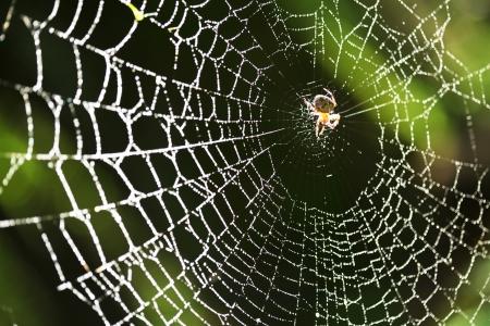 Spider sul web Archivio Fotografico