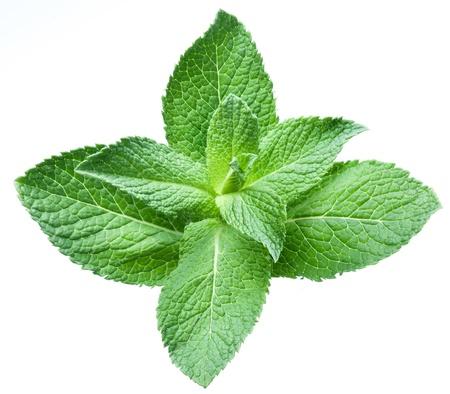 menta: Las hojas de menta sobre un fondo blanco Foto de archivo