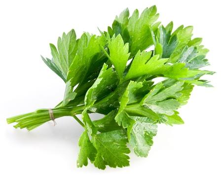 cilantro: El manojo de cilantro verde sobre un fondo blanco
