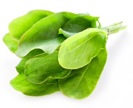 sorrel: Sorrel isolated on white background  Stock Photo