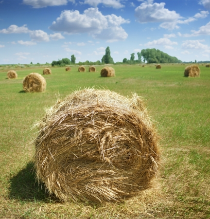 bale: Haystacks on the field against the summer sky