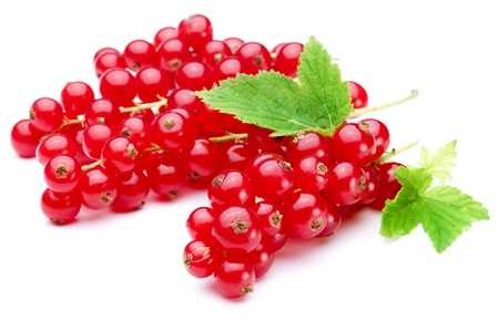 red currant: Bunch of red currants on a white background