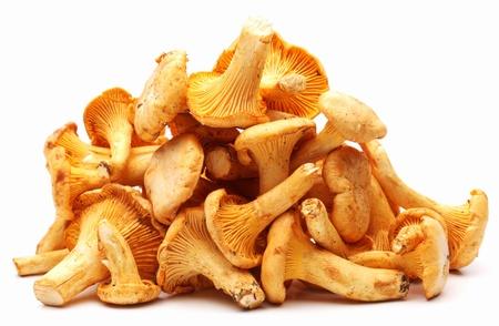 chanterelle: Chanterelles mushrooms on a white background  Stock Photo