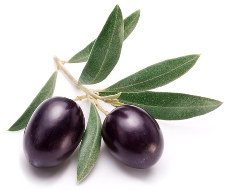 branch: Ripe black olives with leaves on a white background