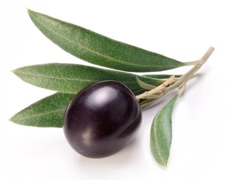 olive leaf: Aceituna madura negro con hojas sobre un fondo blanco